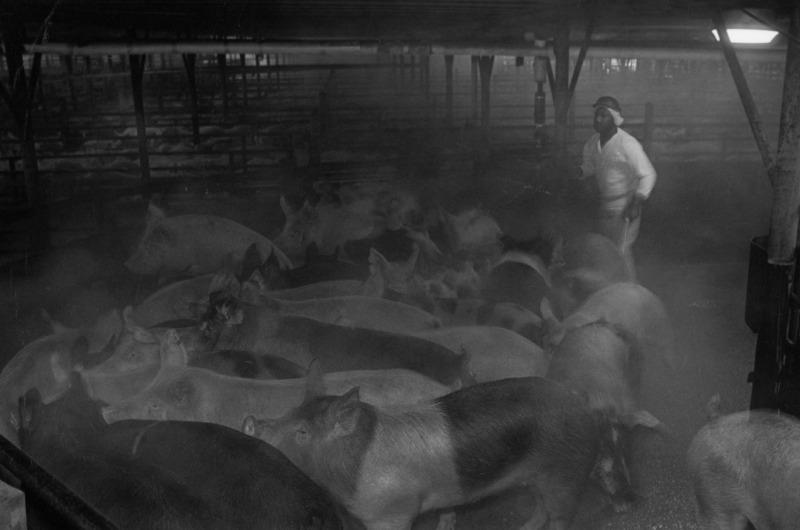 Smithfield-Ham-slaughterhouse-010-p