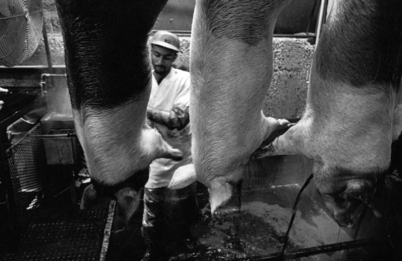 Smithfield-Ham-slaughterhouse-032-p