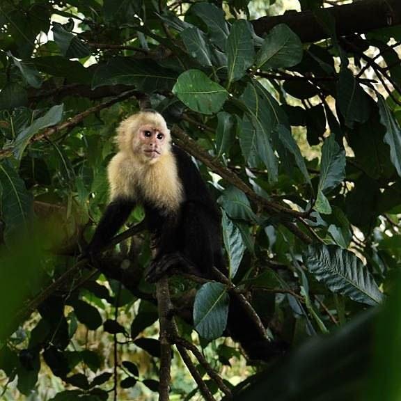 Costa_Rica_0446_sq_sm
