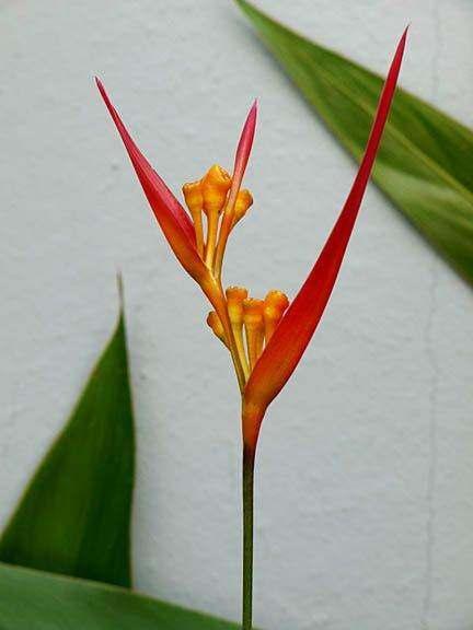 Costa_Rica_0449_sm
