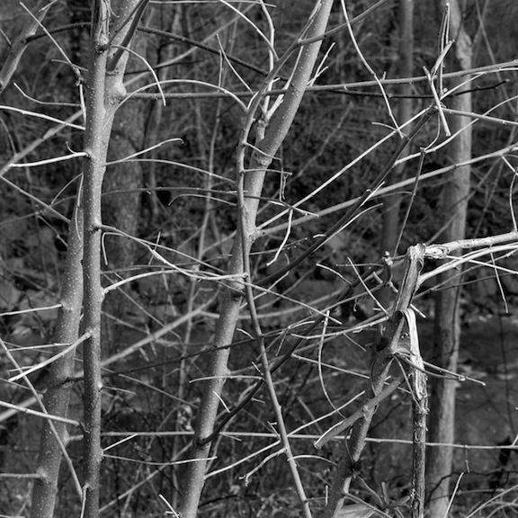 Density_Dec_31_2010_074_p2
