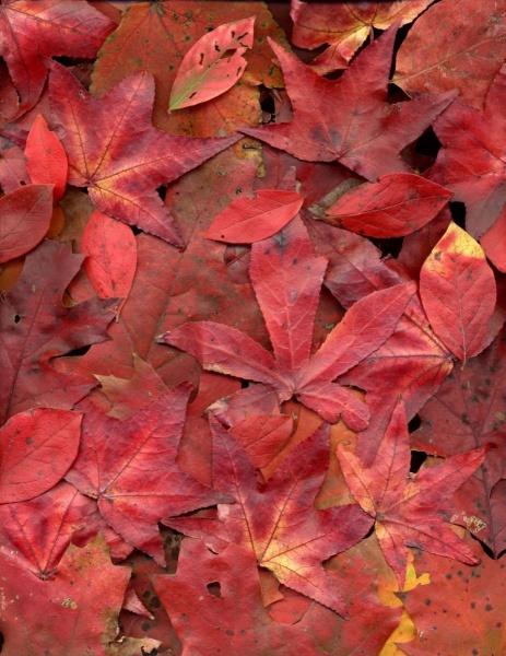 leaf_009