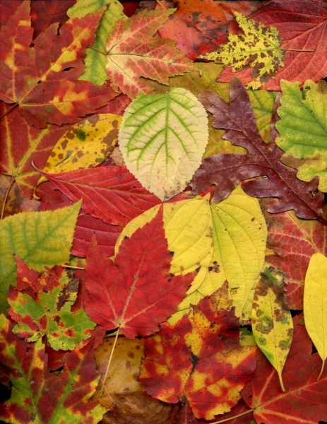 leaf_013