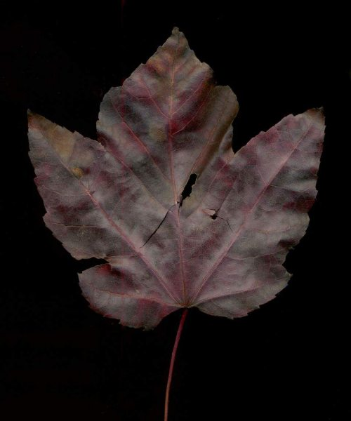 leaf_018
