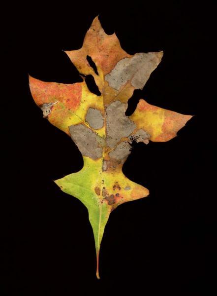 leaf_021