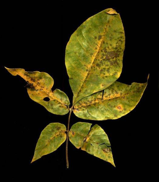 leaf_024