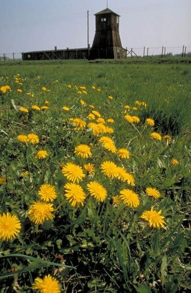 Majdanek_Flowers_sm