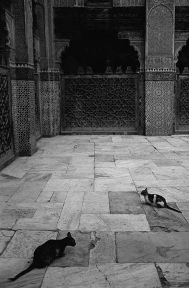 Cats_in_Medrassa_001_sm