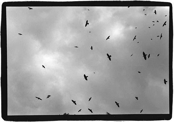 Birds_over_Przemysl_sm
