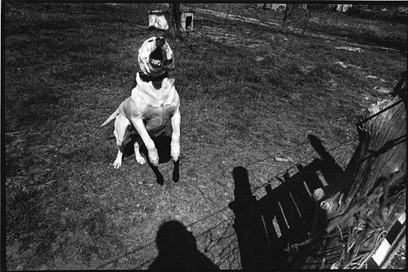 Dizzy-dog_barking_1974_sm
