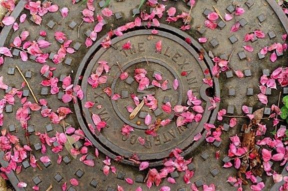 petals_on_manhole_cover_sm