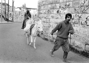 c58-Man w donkeys Mt of Olives sm.jpg
